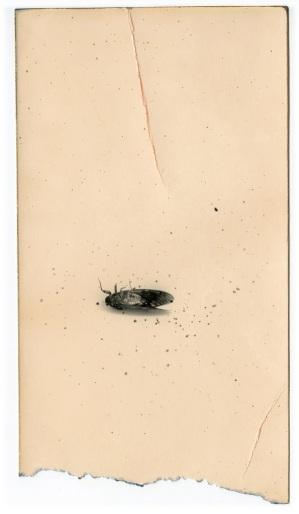 """""""A BOX OF KU"""", Masao Yamamoto. Imagen reproducida por gentileza de la Galeria Valid Foto."""