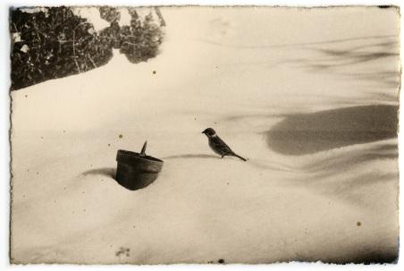 """""""A BOX OF KU #77"""", Masao Yamamoto. Imagen reproducida por gentileza de la Galeria Valid Foto."""