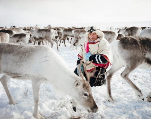 Los Sami, Erika Larsen, 2007-2011. Los renos s e asustan fácilmente, por ello Nils Peder se arrodilla con delicadeza en medio de la manada y tatarea una canción tradicional
