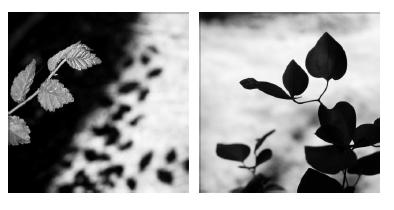 Ressonàncies, de Maria Frigola, 2013. Fotografía en B/N