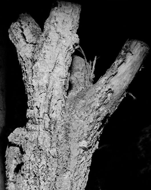 Memoria de cantera árbol Nº 2